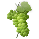 icon grapes green